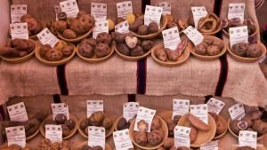 Feria Gastronómica Mistura - Variedad de Papas