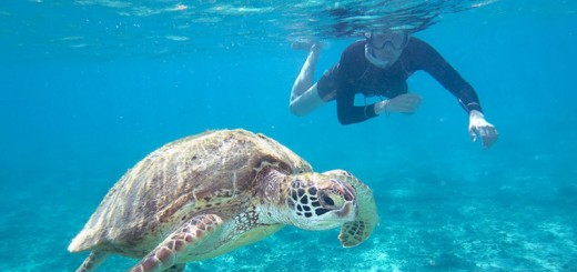 Nada con tortugas en la playa El Ñuro